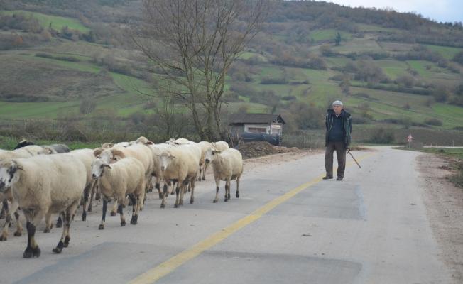 Gebze'nin 69 hektar merası kaldı!