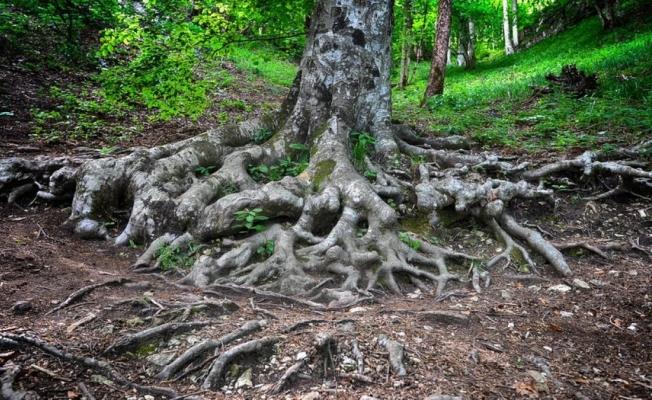 Ormanın altında ne var?