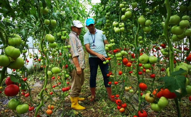 Kocaelili Çiftçiye yüzde 50 hibeli sera desteği