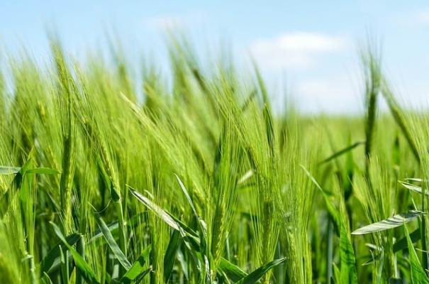 Tarım Bakanlığı, 7 Alanda Destek Ödemesi Yatırıyor…