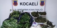Kocaeli'de 1 ay içinde çok sayıda uyuşturucu madde ele geçirildi
