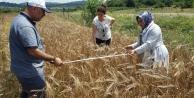Çiftçileretohum desteği talep kabulü başladı