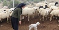Çiftçilere Yılbaşı Piyangosu Vurdu