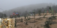 Gaziler Ormanını  çam kese böcekleri bastı!