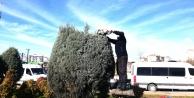 Gebze'de ağaçlarabahar bakımı