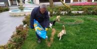 Gebze Belediyesi sokak canlarını unutmadı