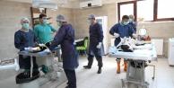Büyükşehir,  bin 809 yaralı ve hasta sokak hayvanını hayata döndürdü