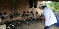 Kandıra Hindisi markası yeniden hayat bulacak