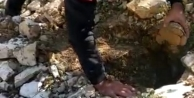 Darıca'da kuyuya düşen kaplumbağaları Büyükşehir güvenliği kurtardı