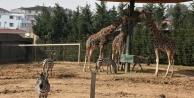 Darıca Hayvanat Bahçesi Açıldı